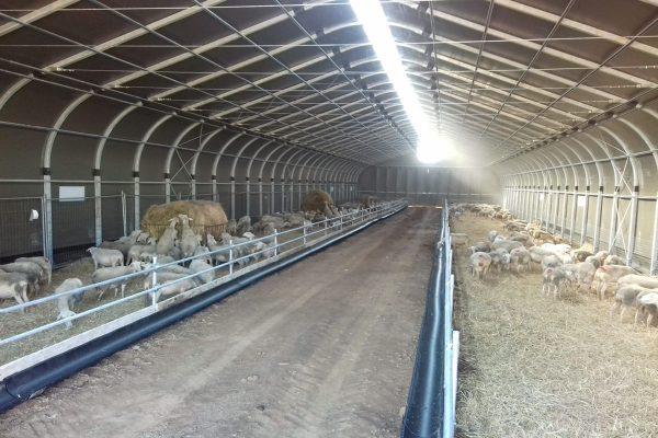 Sheep and goat fabric farm shelter, Landwirtschaftliche Bogenhalle für Schafe